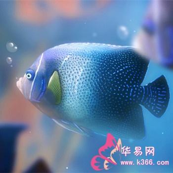 梦见很多鱼在水里游