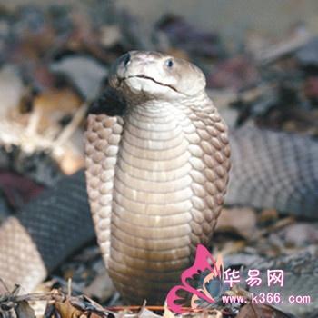 梦见蛇头-周公解梦-华易算命网