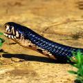 qg777钱柜娱乐杀蛇