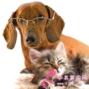 孕妇梦见猫和狗