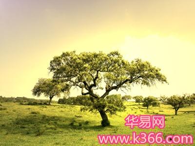 梦见大树-梦到大树是什么意思-做梦梦见大树好不好